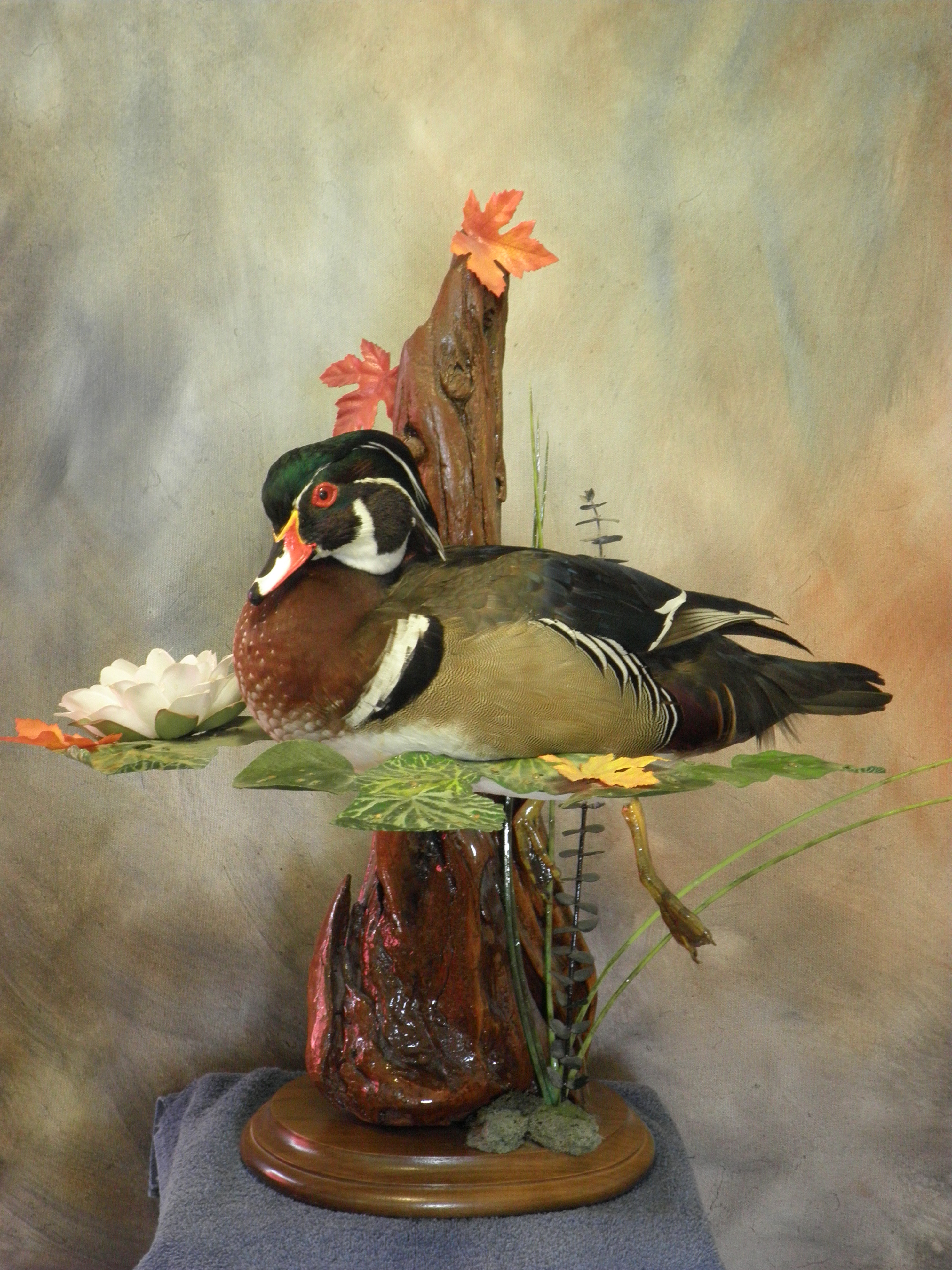 Waterfowl Taxidermy | www.topsimages.com